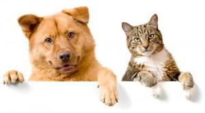 طراحی وب سایت مرتبط با حیوانات